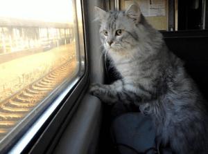 Правила перевозки животных в поезде Ласточка